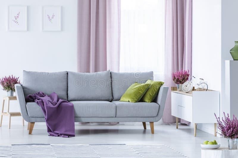 Elegant vardagsrum med den stora bekväma gråa soffan med olivgröna gröna kuddar och den violetta filten i mitt royaltyfri fotografi