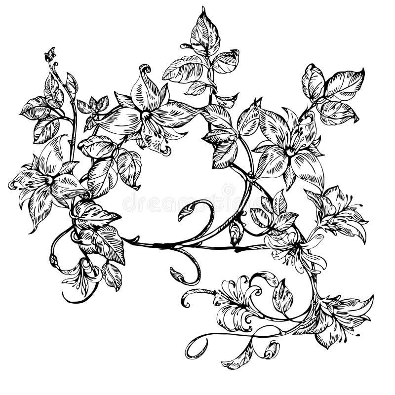 Eleganta blommor för tappning Svartvit vektorillustration Honeysuckle Flower bostonian stock illustrationer