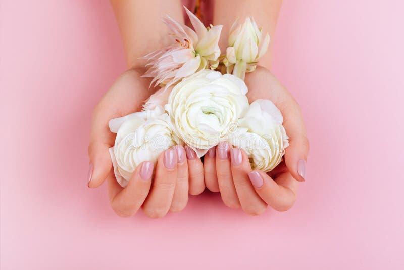Eleganta kvinnliga händer med Manicured rosa färger spikar royaltyfri foto