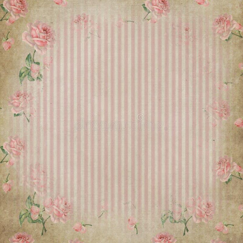 Eleganta sjaskiga band och rosor vektor illustrationer