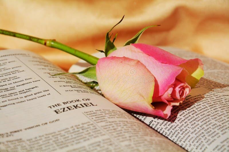 Elegante Blume, Symbole der Leidenschaft stockfoto
