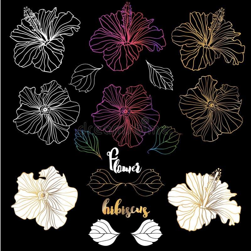 Elegante dekorative Hibiscusblumen des Vektors, Gestaltungselemente stock abbildung