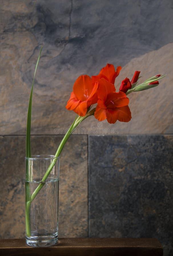 Elegante geïsoleerde gladiolen in een eenvoudige vaas stock afbeeldingen