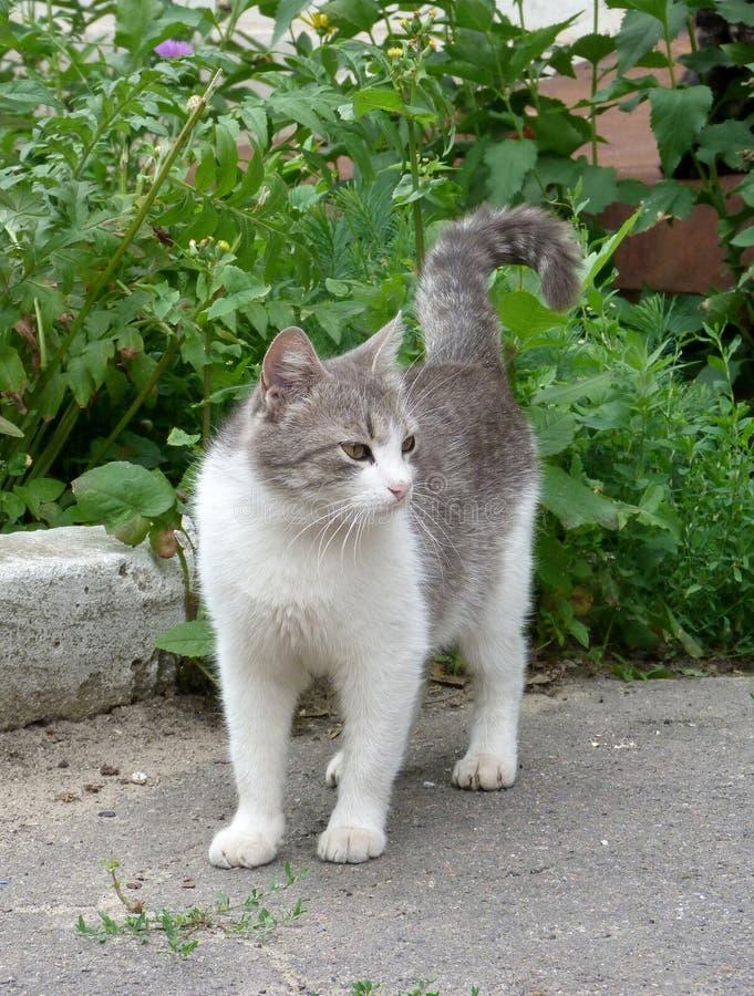 Elegante kat met geloenste ogen royalty-vrije stock afbeeldingen