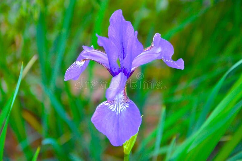 Elegante purpurrote Blume lizenzfreies stockfoto