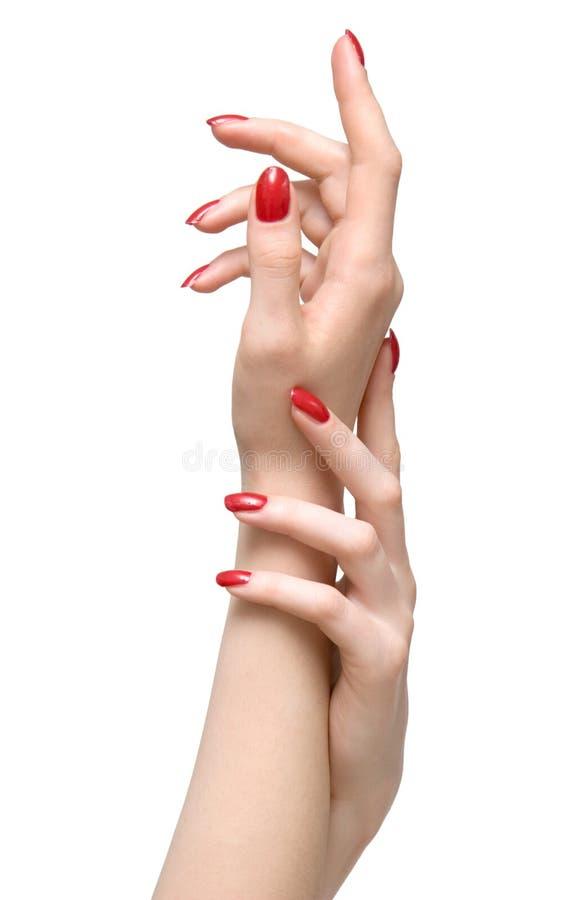 Elegante vrouwenhanden stock afbeelding