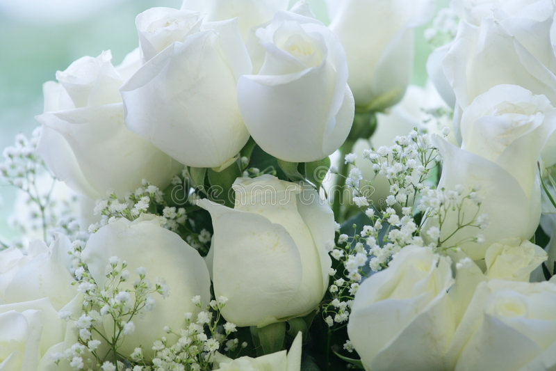 Elegante zuivere witte rozen royalty-vrije stock foto's