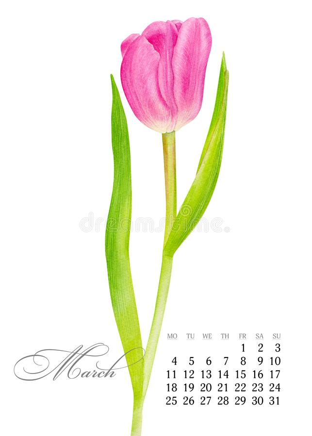 Eleganter bedruckbarer Kalender 2019 märz Rosa Tulpe des Aquarells Saftige botanische Platte - verlassen Sie Kaktus, Kaktusfeigek stock abbildung