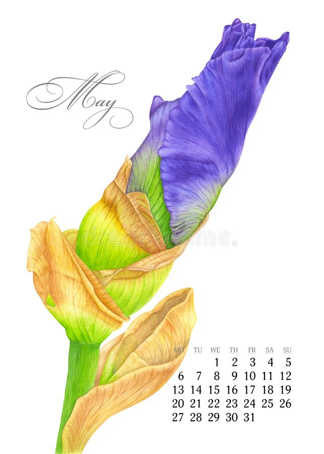 Eleganter bedruckbarer Kalender 2019 may Aquarelliris Saftige botanische Platte - verlassen Sie Kaktus, Kaktusfeigekaktus und Sag stock abbildung