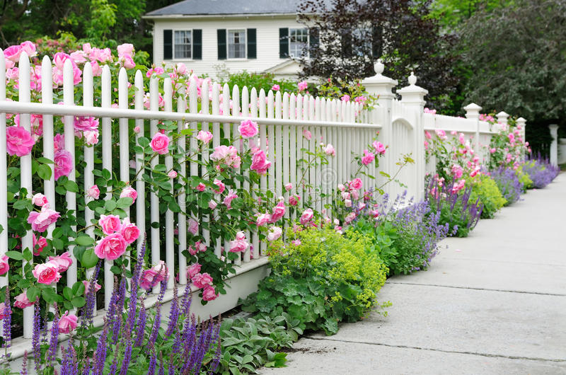 Eleganter Garten-Zaun mit Rosen stockfotos