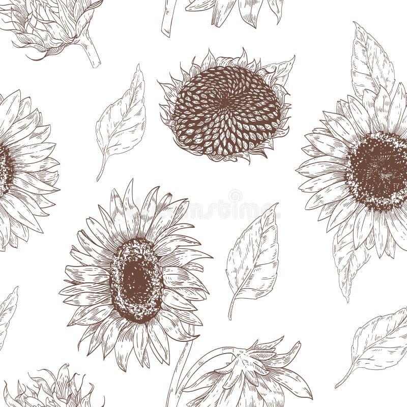 Elegantes nahtloses mit Blumenmuster mit Sonnenblumenteilen Hintergrund mit schönen Blumen und Blätter übergeben gezogenes auf We stock abbildung