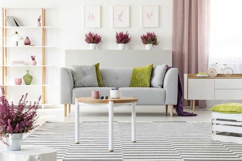 Elegantes Wohnzimmer mit weißen Möbeln, stilvollem hölzernem Couchtisch, kopierter Wolldecke, grauer Couch mit Kissen und Heide lizenzfreie stockfotografie