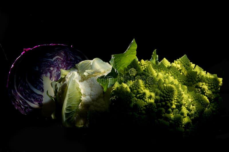Eleggant cabagges, lilor, vit och gräsplan arkivfoton