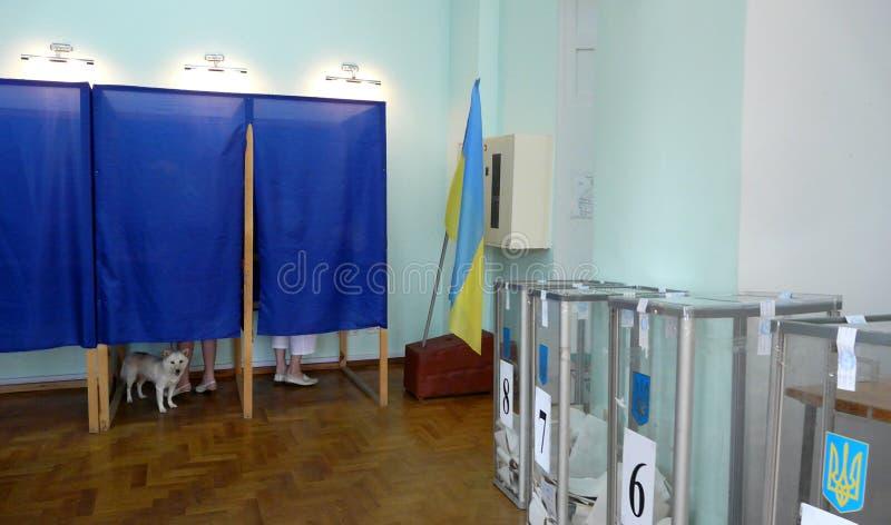 Elei??es em Ucr?nia O cão participa no voto Bandeira ucraniana no fundo, Odessa, Ucrânia - em julho de 2019 fotografia de stock royalty free