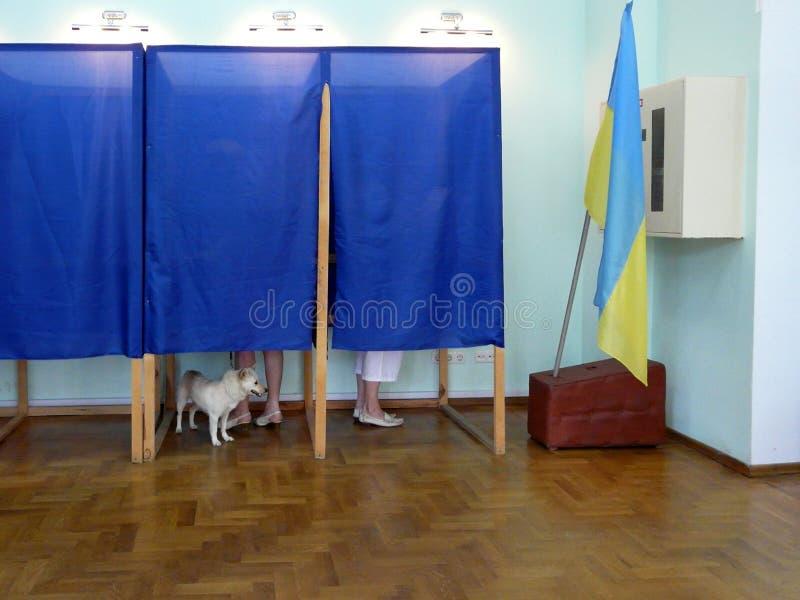 Elei??es em Ucr?nia O cão participa no voto Bandeira ucraniana no fundo, Odessa, Ucrânia - em julho de 2019 fotos de stock royalty free
