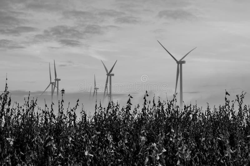 Elektriciteitsturbine, windlandbouwbedrijf stock foto