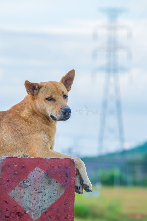 Elektricitet och hund royaltyfria bilder