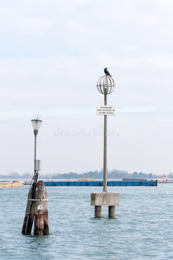 Elektricitetspol med en fågel överst, i den Venedig lagun, Italien royaltyfri foto