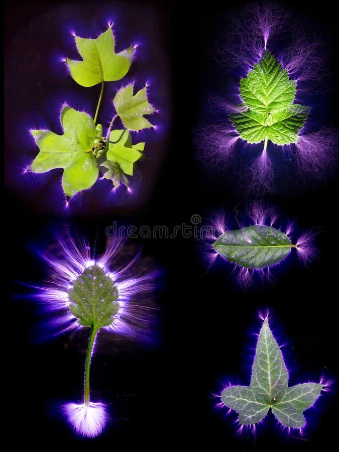 Elektrische die stroom door vijf verschillende types van blad wordt overgegaan stock fotografie