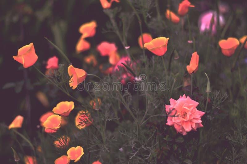 Elektrische farbige Blumen lizenzfreie stockfotografie