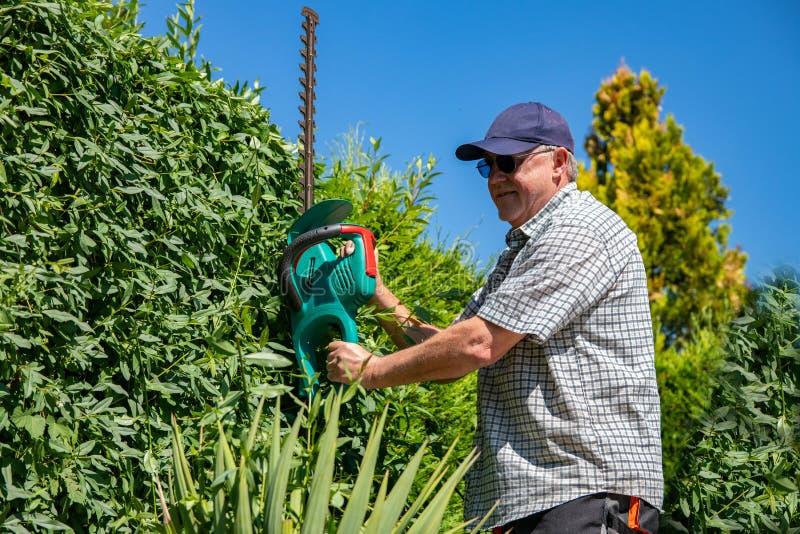 Elektrische het tuinieren hulpmiddelen Een professionele tuinman snijdt een haag met een elektrische haagsnoeischaar Tuinierende  royalty-vrije stock afbeelding