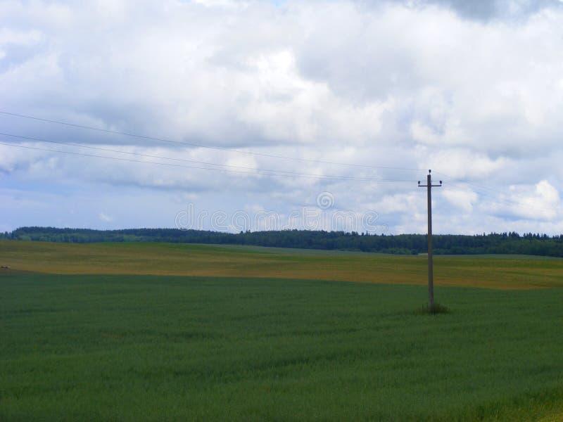 Elektrische PfostenStromleitungen und Drähte auf Feld und blauem Himmel stockfotos