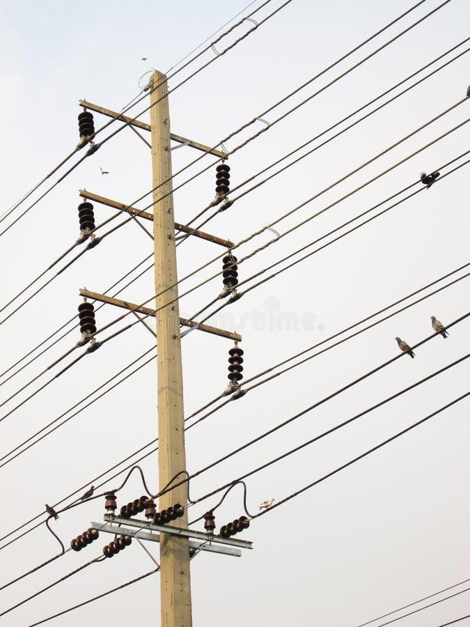 Elektrische post, detail met vogel, vervoerenergie royalty-vrije stock fotografie