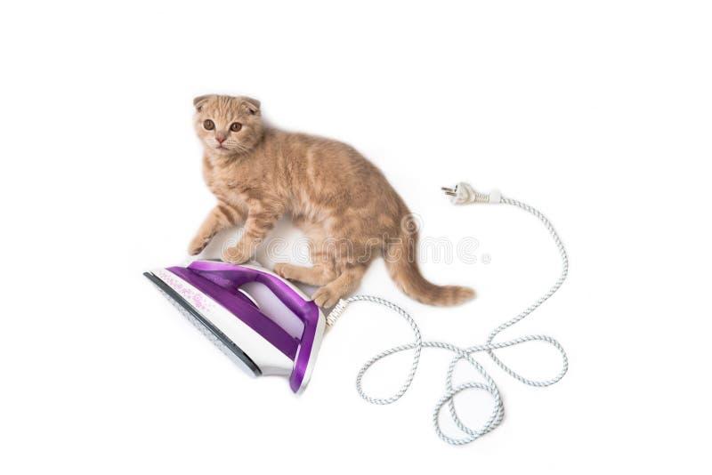 Elektrisches Eisen mit lustiger Katze auf ihr auf weißem Hintergrund Kopieren Sie Platz Kreatives Konzept der Feiertagskarte, Fah lizenzfreie stockfotos