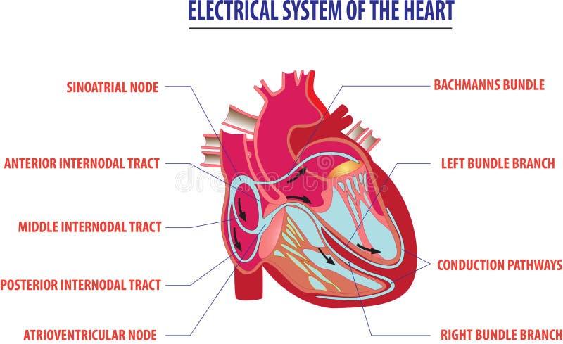 Elektrisches System der Herzarbeitsillustration lizenzfreie abbildung