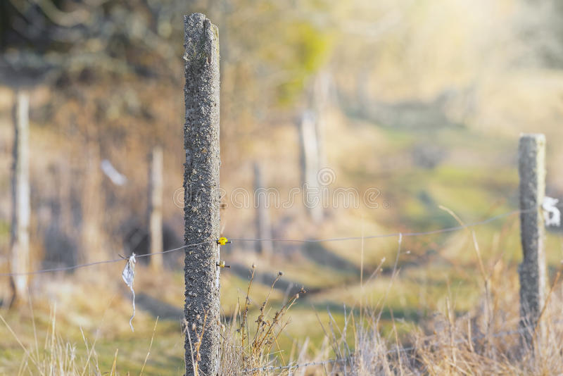 Elektrisk staketstolpe som fäktar ett fält för grönt gräs royaltyfria bilder