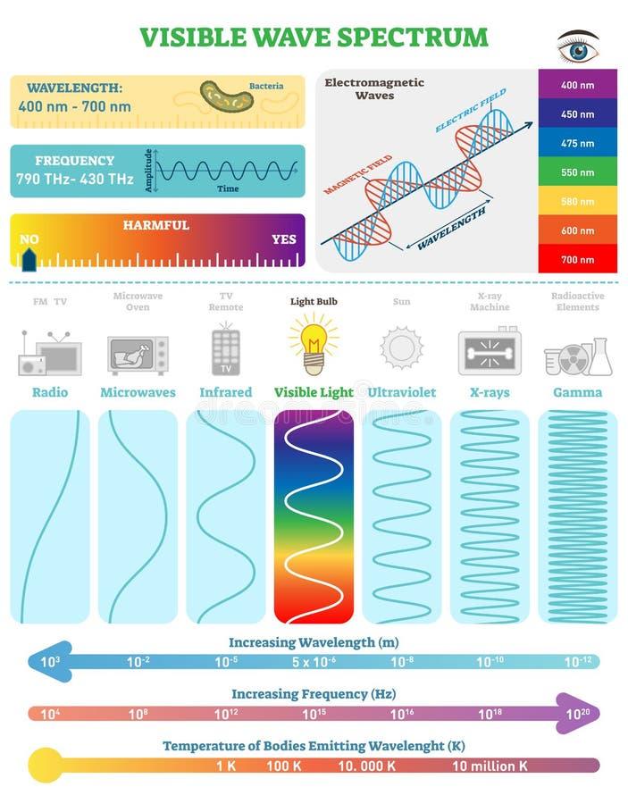 Elektromagnetische Golven: Zichtbaar Golfspectrum Vectorillustratiediagram met golflengte, frequentie en golfstructuur stock illustratie