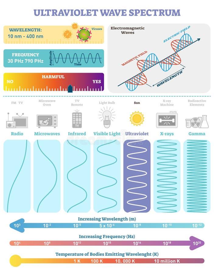 Elektromagnetiska vågor: Ultraviolett vågspektrum Vektorillustrationdiagram med våglängd, frekvens och vågstrukturen royaltyfri illustrationer