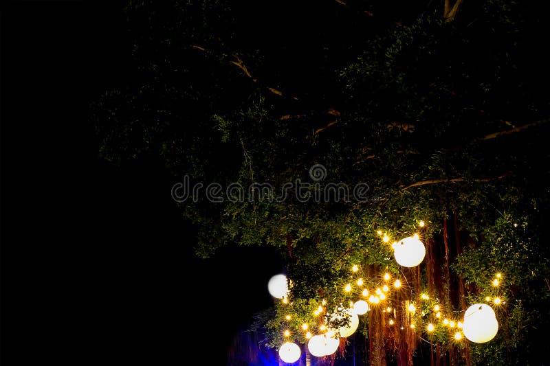 Elektryczna żarówki dekoracja na dużym zielonym drzewie w ogródzie w ślubnym wydarzenie jarmarku fotografia royalty free
