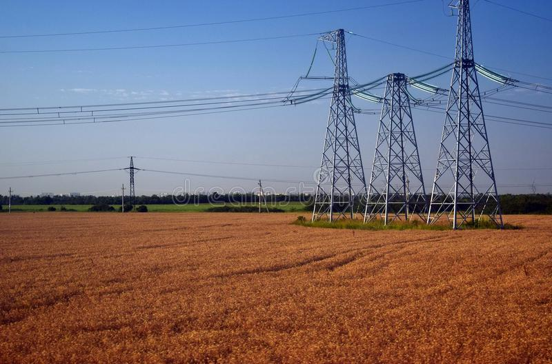 Elektryczni słupy wzrastają nad pole z banatką zdjęcia royalty free