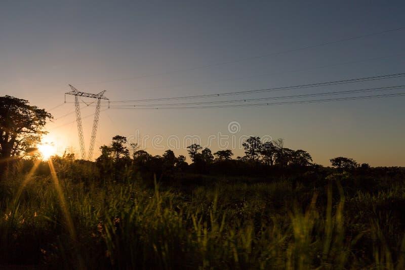 Elektryczność słup iść przez dżungli z zmierzchem zdjęcie stock