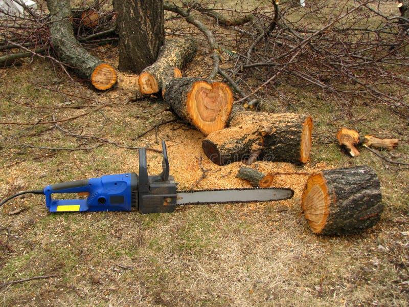Elektryczny zobaczył jest obok drzewnego bagażnika piłującego trociny i zdjęcia stock