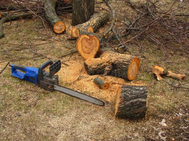 Elektryczny zobaczył jest obok drzewnego bagażnika piłującego trociny i fotografia royalty free