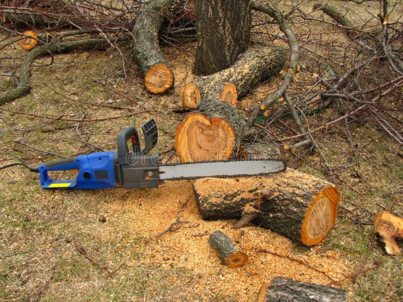 Elektryczny zobaczył jest obok drzewnego bagażnika piłującego trociny i obraz stock