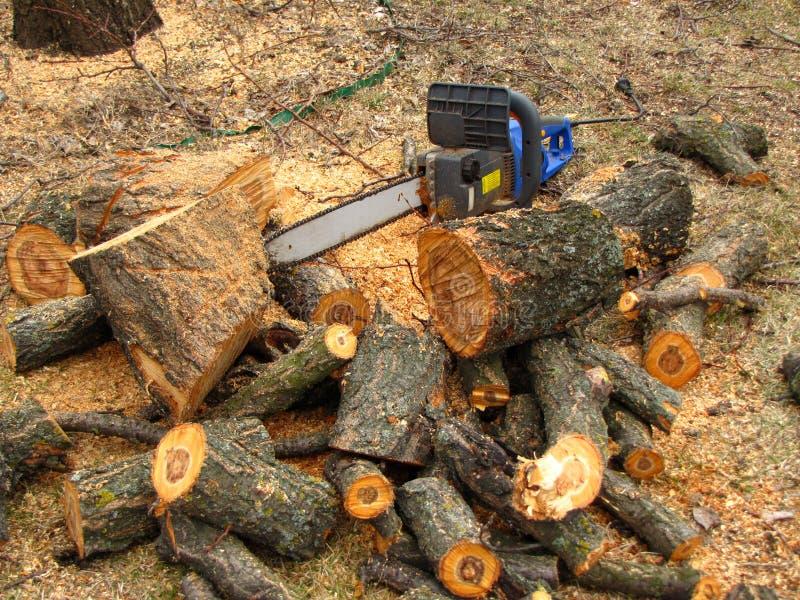 Elektryczny zobaczył jest obok stosu piłujący drzewny bagażnik trociny i fotografia stock