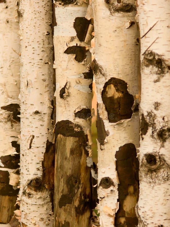elementów bagażniki wewnętrzni drzewni fotografia stock