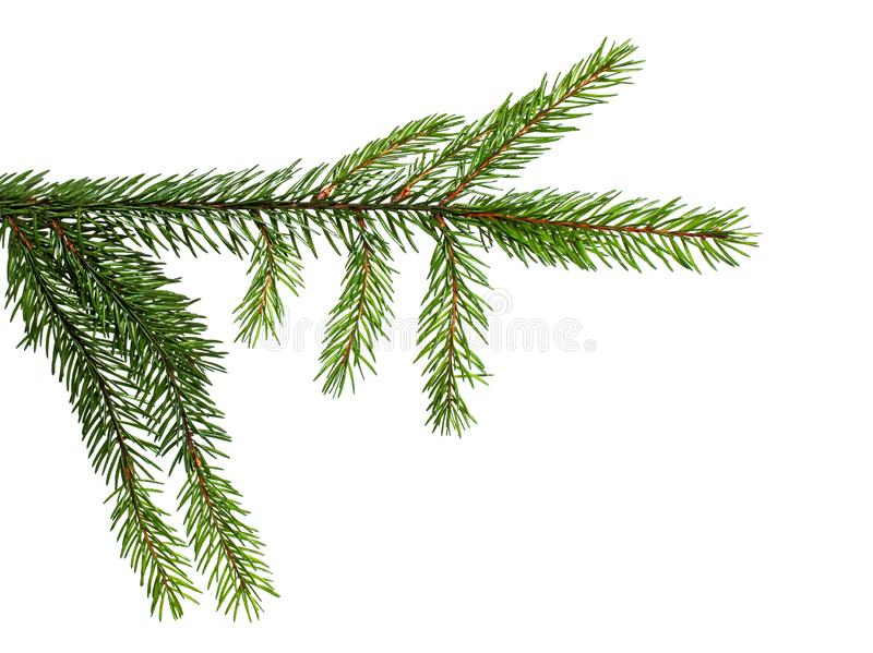 Element for decoration of Christmas branch of green spruce on a white isolated background. Element for decoration of Christmas decor branch of green spruce on a royalty free stock photos
