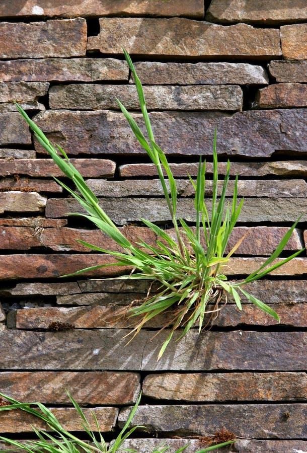 element rock roślin obrazy stock