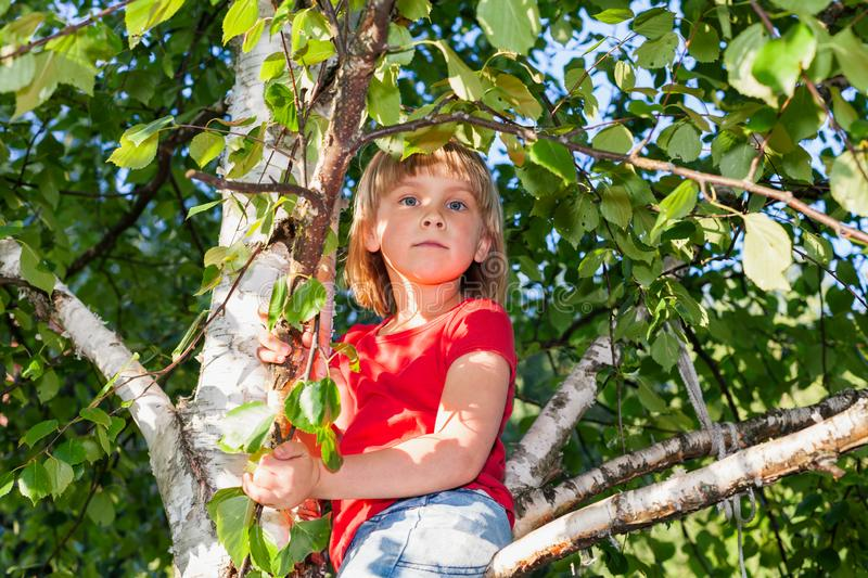 Little girl climbing tree playing in a summer garden - child risky play concept. Elementary age girl climbing a tree branch while playing in a summer garden royalty free stock images