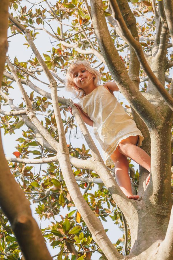 Little girl climbing tree playing in a summer garden - child risky play concept. Elementary age girl climbing a tree branch while playing in a summer garden stock images