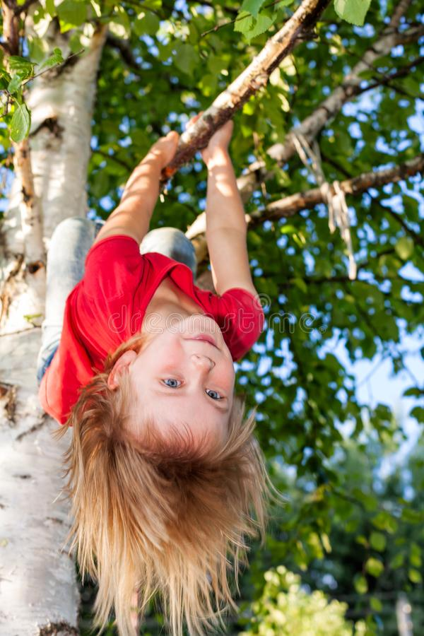 Little girl hanging from a tree playing in a summer garden - child risky play concept. Elementary age girl hanging from a tree branch while playing in a summer stock image