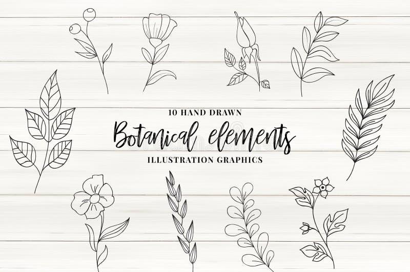 Elementi botanici royalty illustrazione gratis
