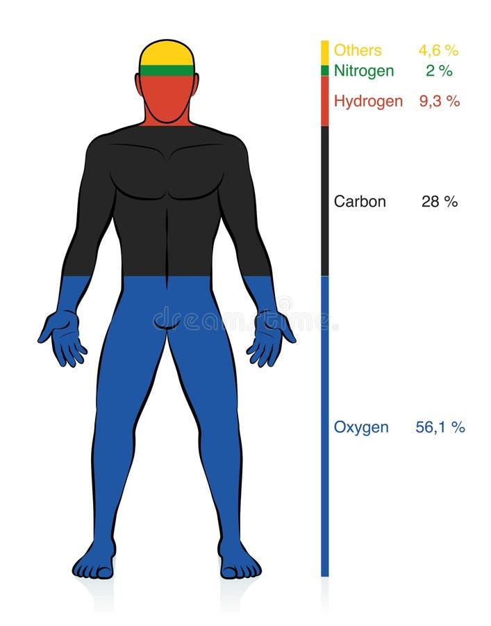 Elementi chimici maschii del corpo umano della composizione chimica illustrazione vettoriale