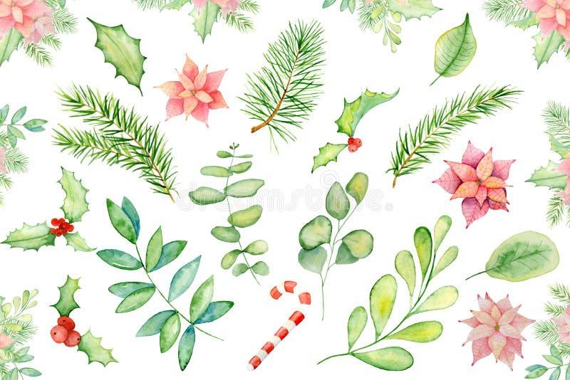 Elementi floreali di inverno dell'acquerello di Buon Natale Carta del buon anno, manifesti Fiori, pino, rami attillati e vischio immagini stock