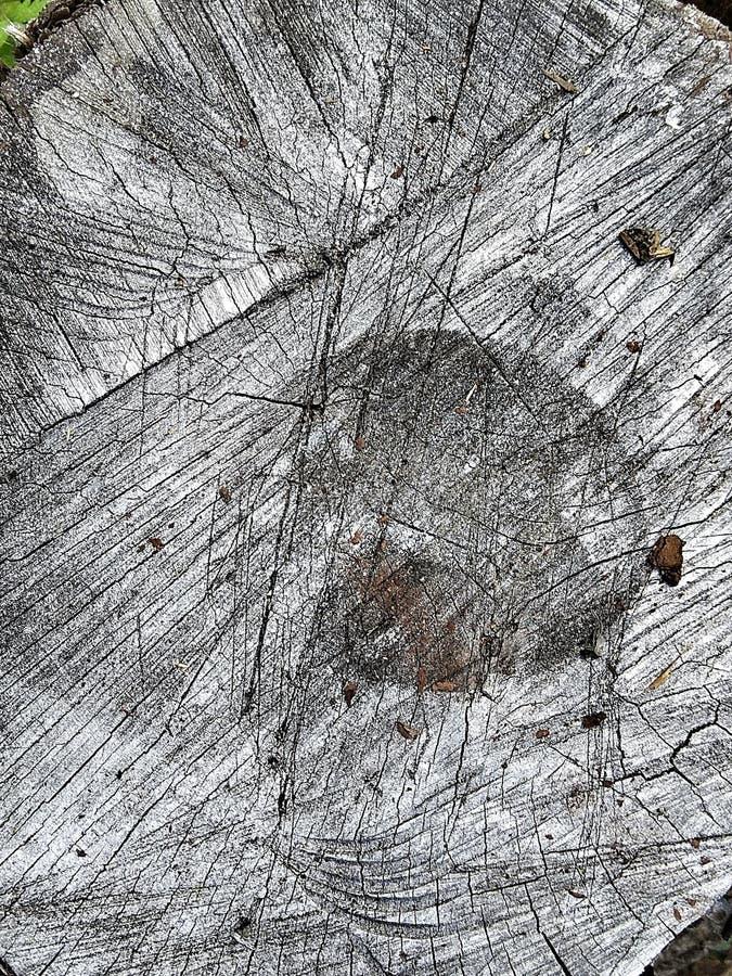 elementi grafici di legna fotografia stock libera da diritti