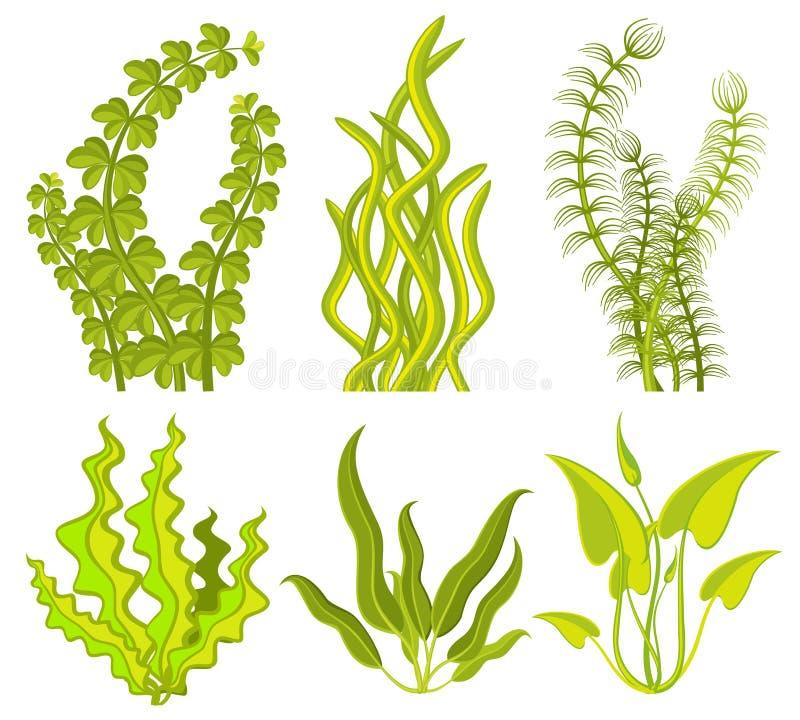 Elementi subacquei di vettore dell'alga royalty illustrazione gratis